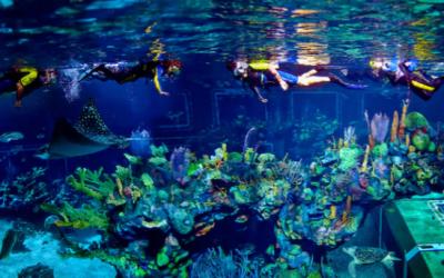 The Epcot Seas Adventures – Aqua Tour