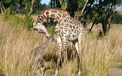 Meet The Newest Resident of Animal Kingdom!